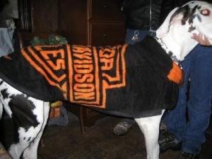 Zena's New Winter Coat